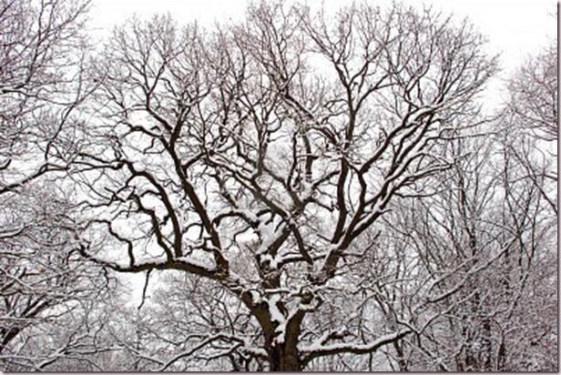 8348578-sneeuw-bedekt-boom-takken-in-winter-forest