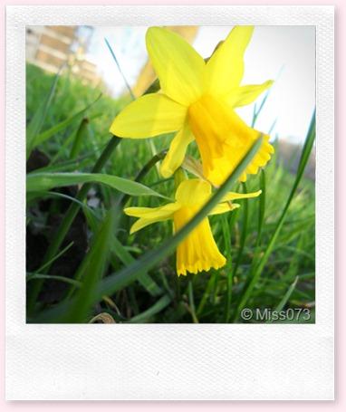 lente! 15 maart 050