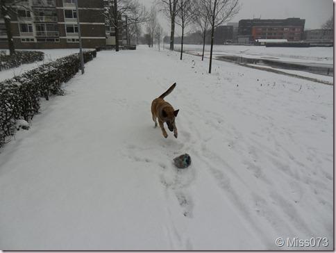 sneeuw2.0 051